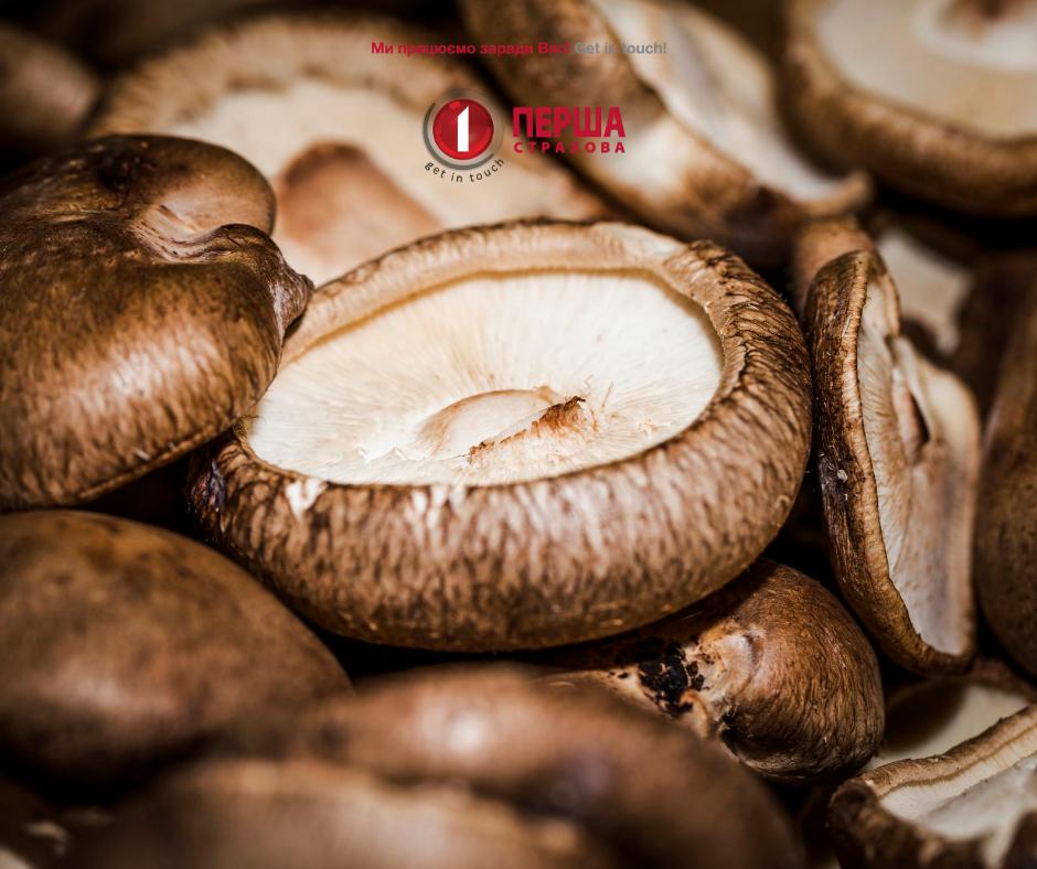 5 советов для тех, кто отправляется за грибами